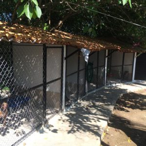 Central Acopio Animal Shelter / transformation with all of our help
