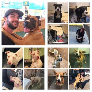 2016 Montreal End BSL Advocacy and Rescue Mission