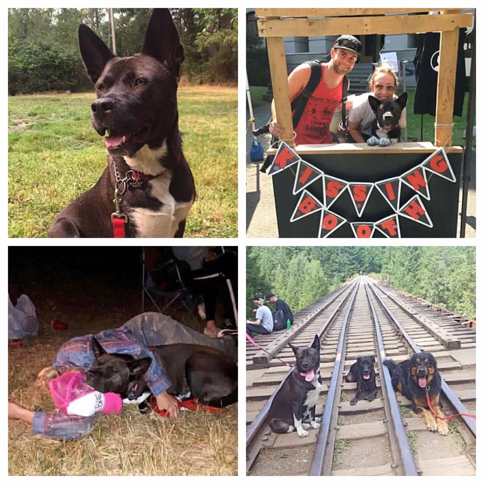 RainCoast Dog Rescue Society RainCoast – Dog Rescue Society