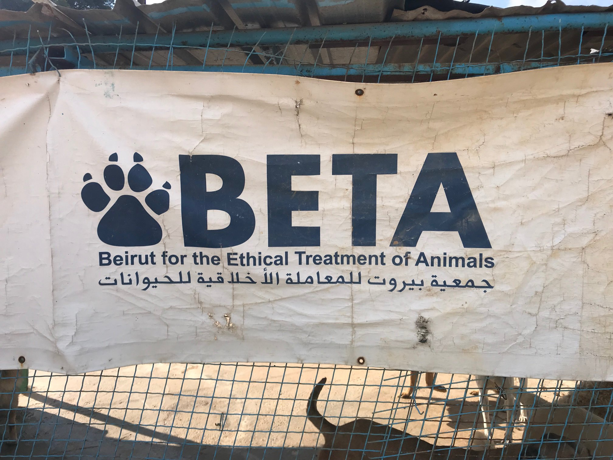 Lebanon & Beirut for the Ethical Treatment of Animals (BETA) Rescue Mission