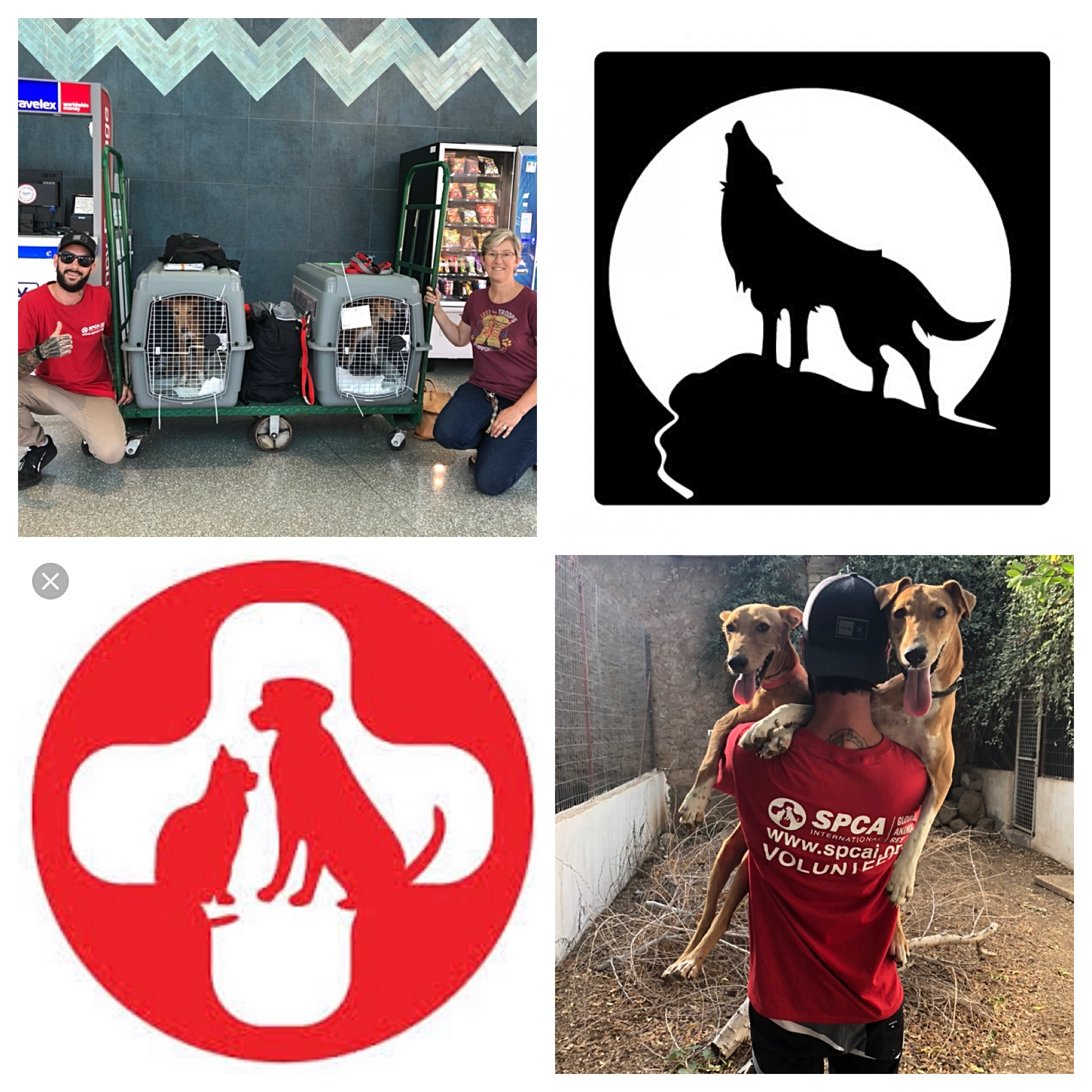 SPCA International : Operation Baghdad Pups / Africa 2019