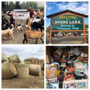 2018 BC Wildfire Animal Relief Mission