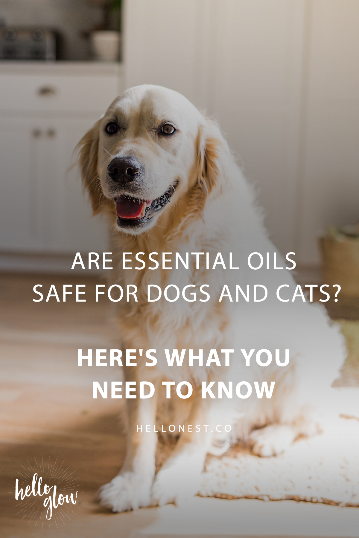 ARE ESSENTIAL OILS SAFE FOR DOGS?
