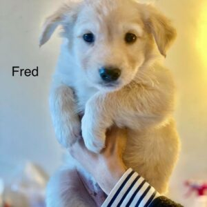 Adoptable Fred