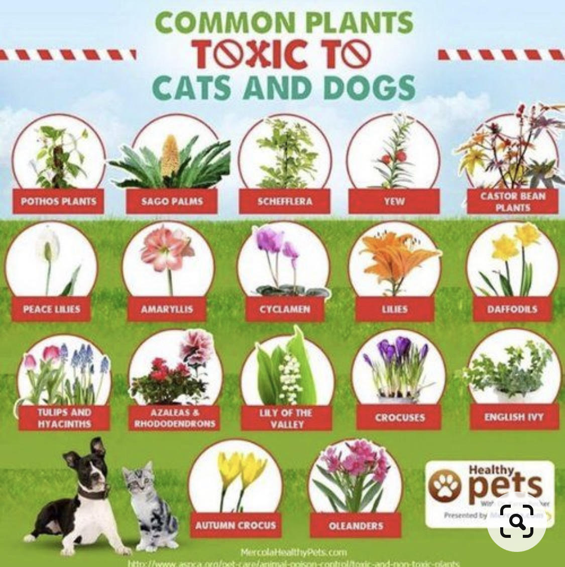 Dangerous Plants for Dogs and Cats